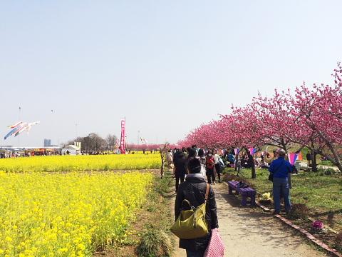 momoroku (2).jpg