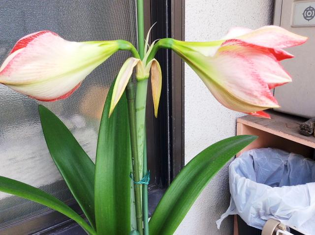 risuma6 (2).jpg