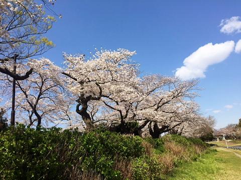 sakuna4.jpg